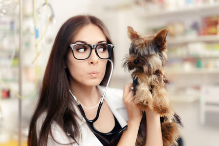 surprised dog: Surprised Veterinarian Female Doctor with Cute Dog