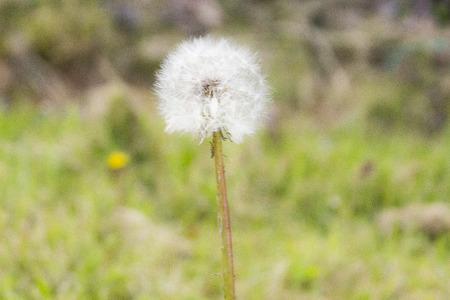 floret: white floret