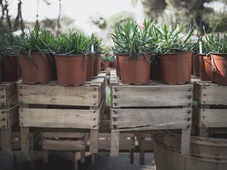 Plantes vertes dans des vases sur vieille surface de planches de bois Banque d'images - 98375312