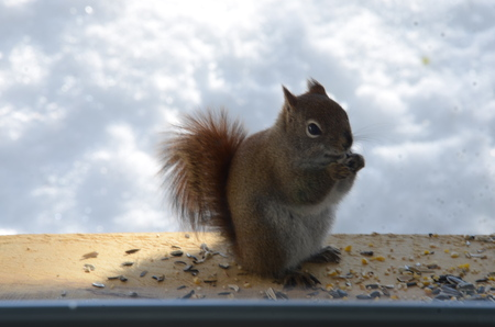 squirrel in the clouds