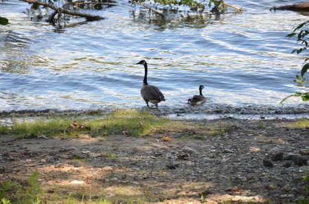 The departure of ducks