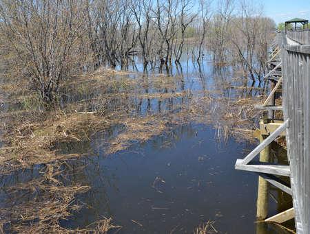 fishing swamp Imagens