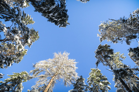 Beautiful scenery with snow on trees in Graubuenden, Engadin, Stock Photo
