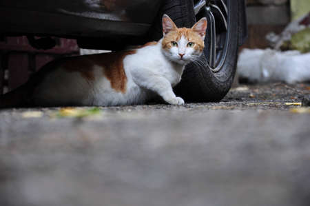stray: Cat  Stock Photo