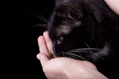 eats: black cat eats with hands on black background