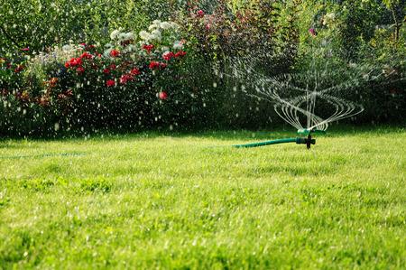 turf flowers: garden sprinkler Stock Photo