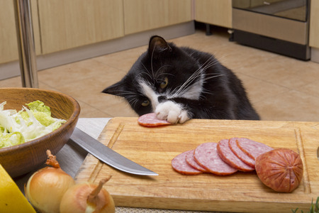 cat steals sausage from the table