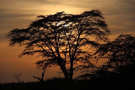 savanna: Savanna sunset