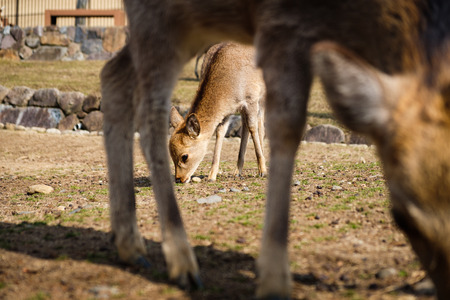 Cute baby deer framed between mother legs love and family concept.