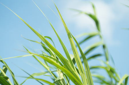 Close up view of grasses under the blue sky