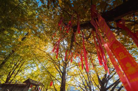 秋の低角度のツリービューを希望 写真素材