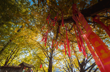 Autumn wishing tree low angle view