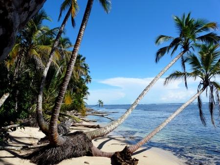 Coconuts trees on the beach,Caribbean, Cahuita, Costa Rica Stok Fotoğraf