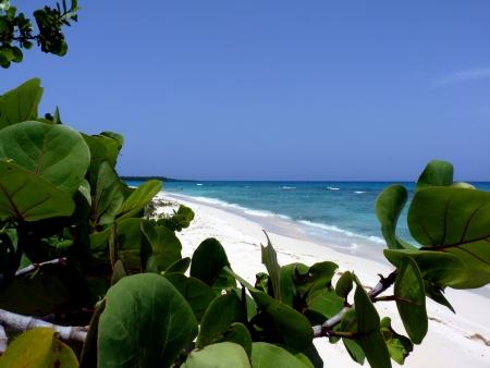catalina: Tropical beach, Catalina Island in Dominican Republic Stock Photo
