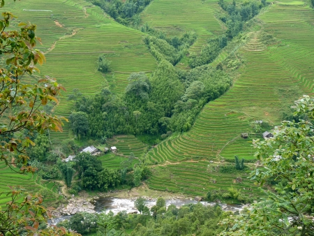 Rice fields in Sapa, Vietnam photo