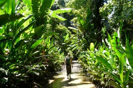 rican: Trek in the wonderful Costa Rican Jungle