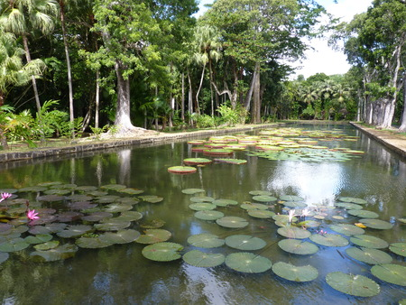 Sir Seewoosagur Ramgoolam Botanical Garden in Pamplemousses, Mauritius photo