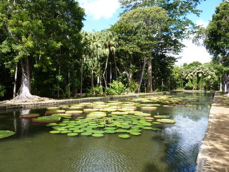 Sir Seewoosagur Ramgoolam Botanical Garden in Pamplemousses, Mauritius Stok Fotoğraf