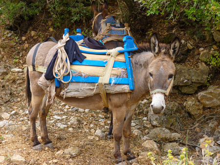 Cute mule waiting in the shade in Amorgos island, Cyclades, Greece