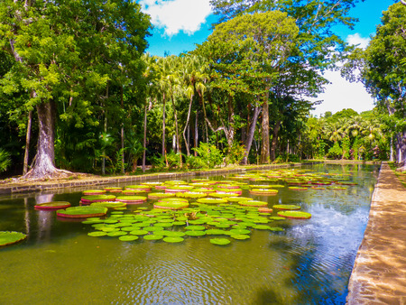 Sir Seewoosagur Ramgoolam Botanical Garden in Pamplemousses, Mauritius Stock Photo