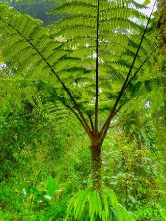 Monteverde national park, Puntarenas, Costa Rica