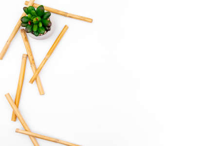 Green succulent with bamboo on white studio background