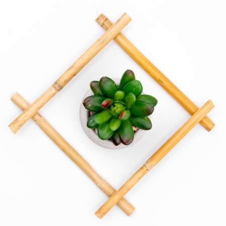 Green succulent in bamboo frame on white studio background Reklamní fotografie