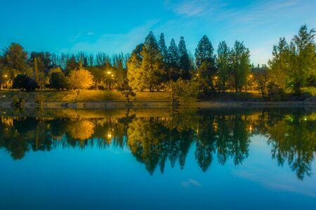 reflection of trees shape like a wave