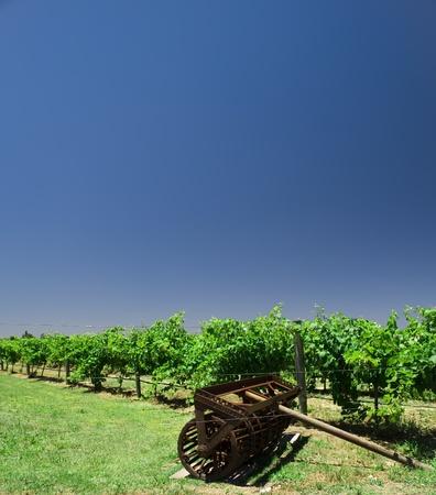 vineyard in australia photo