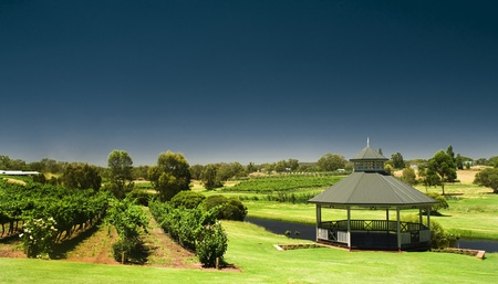 perth: vineyard Stock Photo