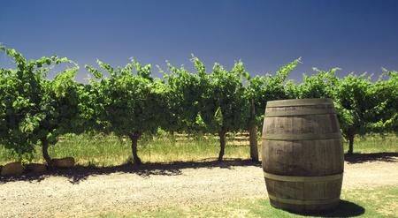 australie landschap: wijnmakerij in Australië