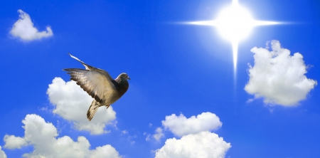 Dove flying towards the sun