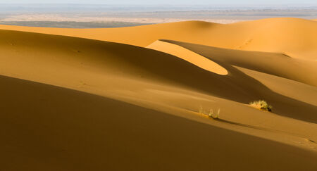erg: Sand dunes in the erg of Merzouga, Morocco. Nobody, landscape