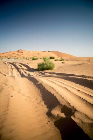 Car track in the sand desert. Nobody, vertical