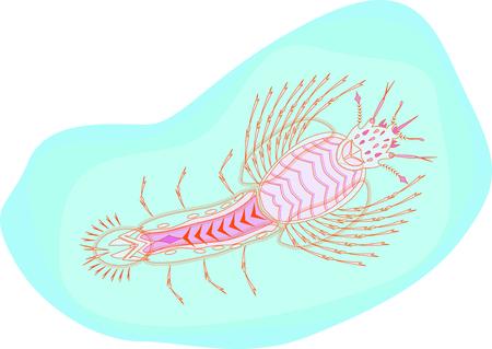 larvae Illustration