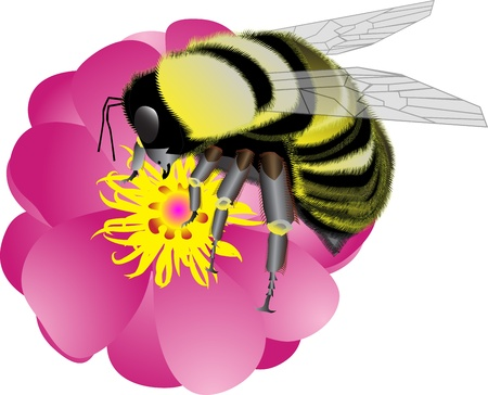 bumble bee: bumblebee