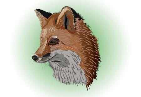 old fox  Stock Vector - 10740439