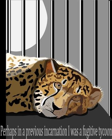 lie down: cheetah in a cage