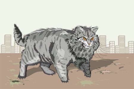 shreds: homeless cat