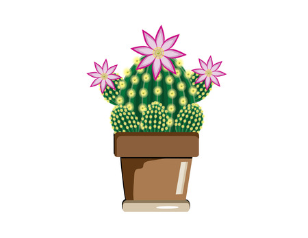 a large cactus with shoots and flowers and three small cactus in peas
