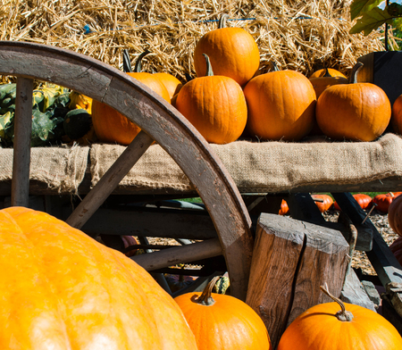 A rustic autumn still life with organic pumpkins in the hay. Organic farm concept.