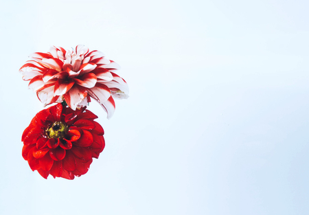 Levitating beautiful flowers under water on bright background. Colorful flower background. Place for your text. Stock Photo