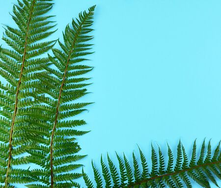 Green fern leaves on blue background with copy space.