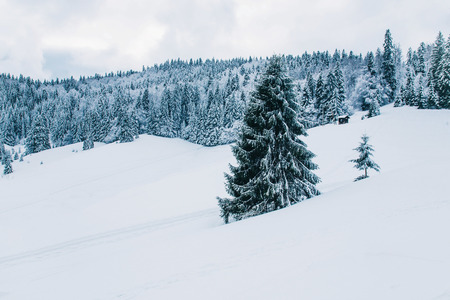 Beautiful winter landscape in the mountains. Cold weather, snow on hills. Black forest, Germany. Kho ảnh