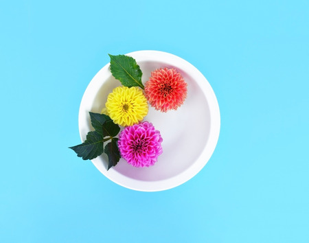 Beautiful dahlia flowers in white bowl with water on turquoise background.