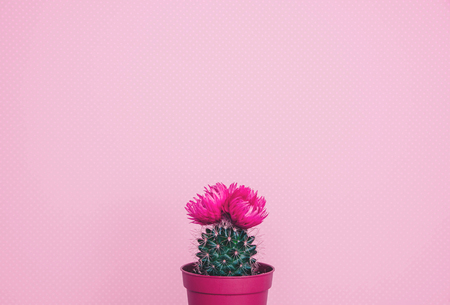 Small cactus in a flowerpot on a trendy background.