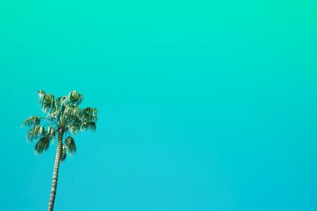 Three nice palm trees against blue sunny sky.