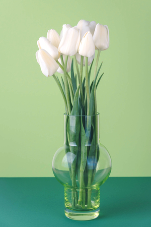 White tulips on a green background.