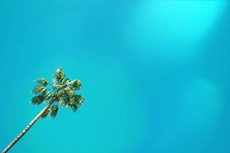 Palm tree against blue sunny sky.