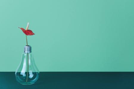 Red Anthurium flower in vase on green background.